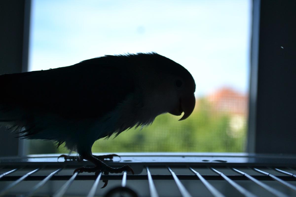 Ley de Protección Animal, Madrid- Infracciones y Sanciones